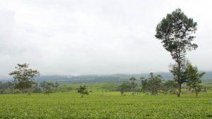 Objek Wisata di Pangalengan Bandung