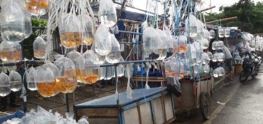 pasar ikan