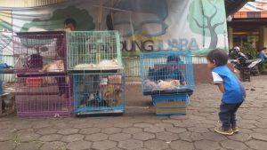 penjual hewan peliharaan dan jasa pengiriman hewan