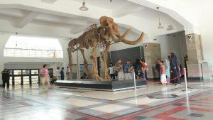 fosil gajah