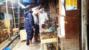 Pasar Burung Suka Haji