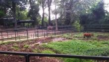 Kebun Binatang Bandung, Luasnya Mencapai 14 Hektare