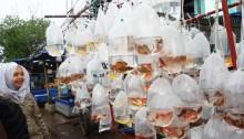 Pasar Ikan Jalan Peta, Jual Piranha Langsung Dirajia