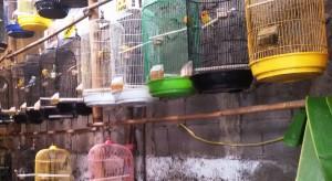 Pasar Burung Sukahaji Jalan Peta Bandung. | Foto serbabandung #serbabandung