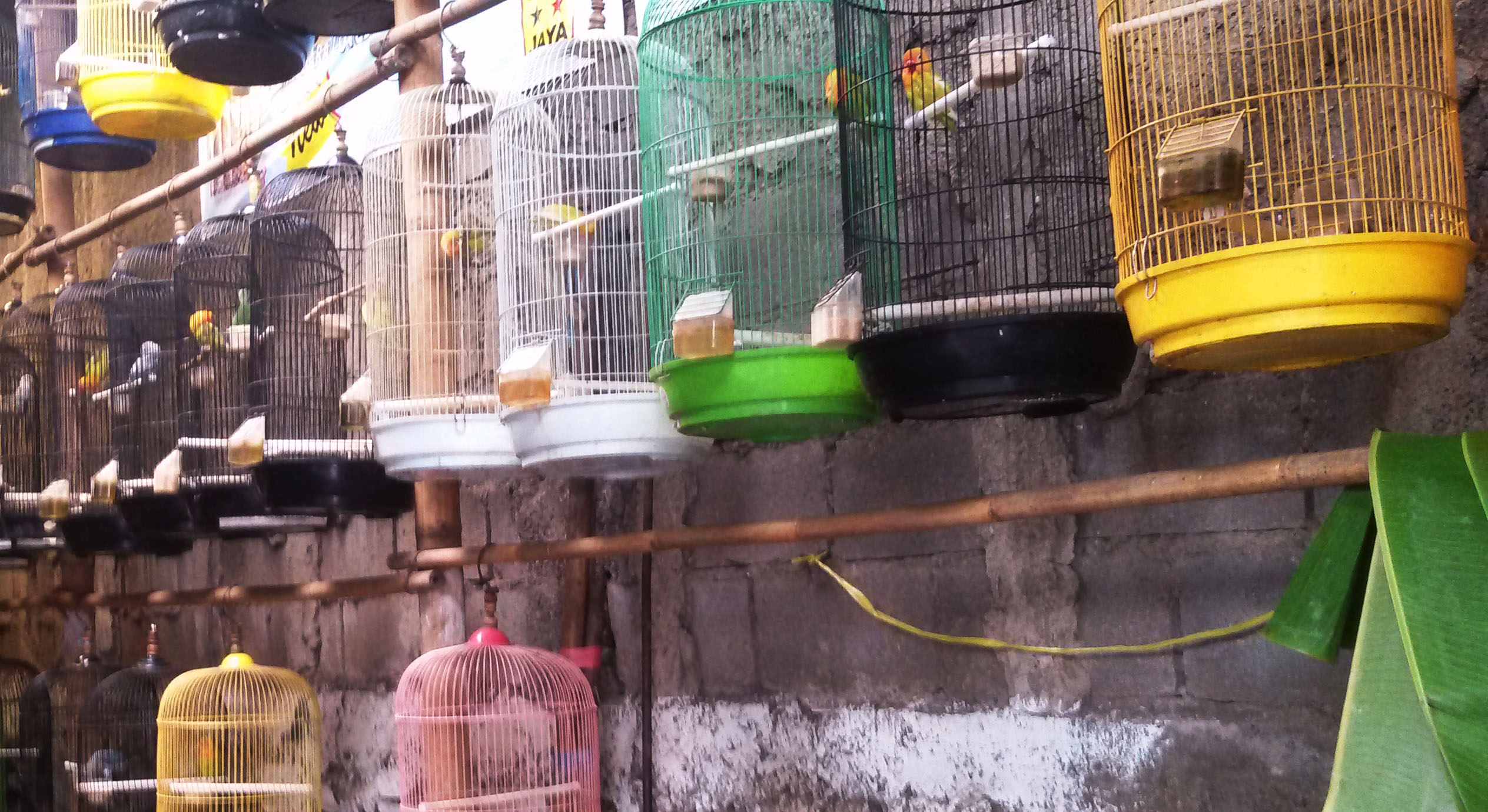 pasar burung sukahaji