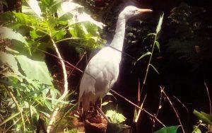 burung di taman burung  Bird & Bromelia Pavilion