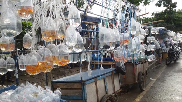 Pasar Ikan Hias yang Lengkap dan Harganya Terjangkau di Bandung