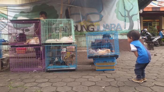 penjual hewan peliharaan